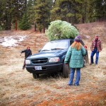 Cut down our christmas tree in the forest service land behind the parents house. Great access back there!