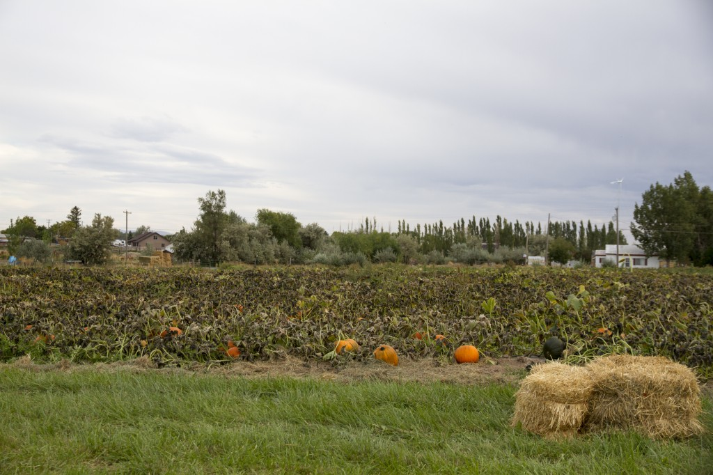 130921_PumpkinPatch_00