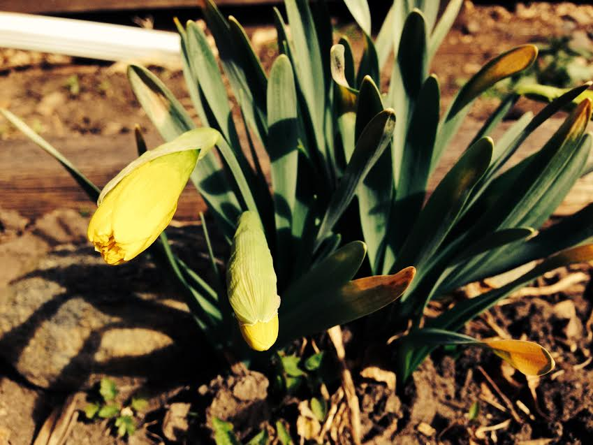 sunny and warm. already blooming and it's only March.