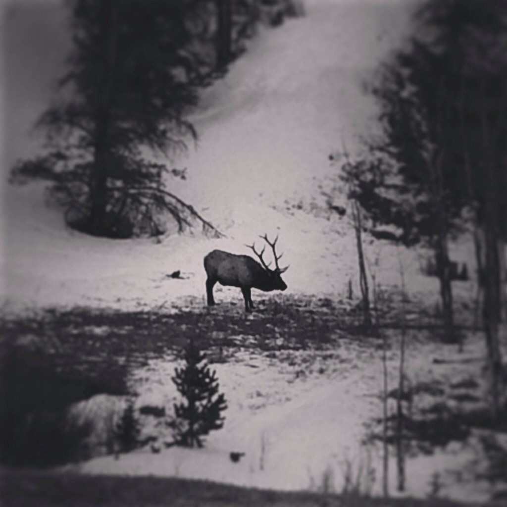 Saw this guy chill in on the side of the road on the way down from Rocky Mountain National Park. Front Range Zone