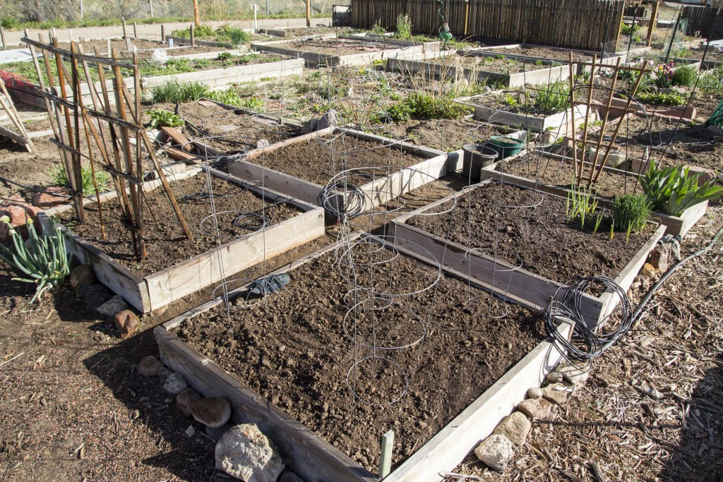 Ready to plant! Tomato cages up and sugar snap pea trellis in!