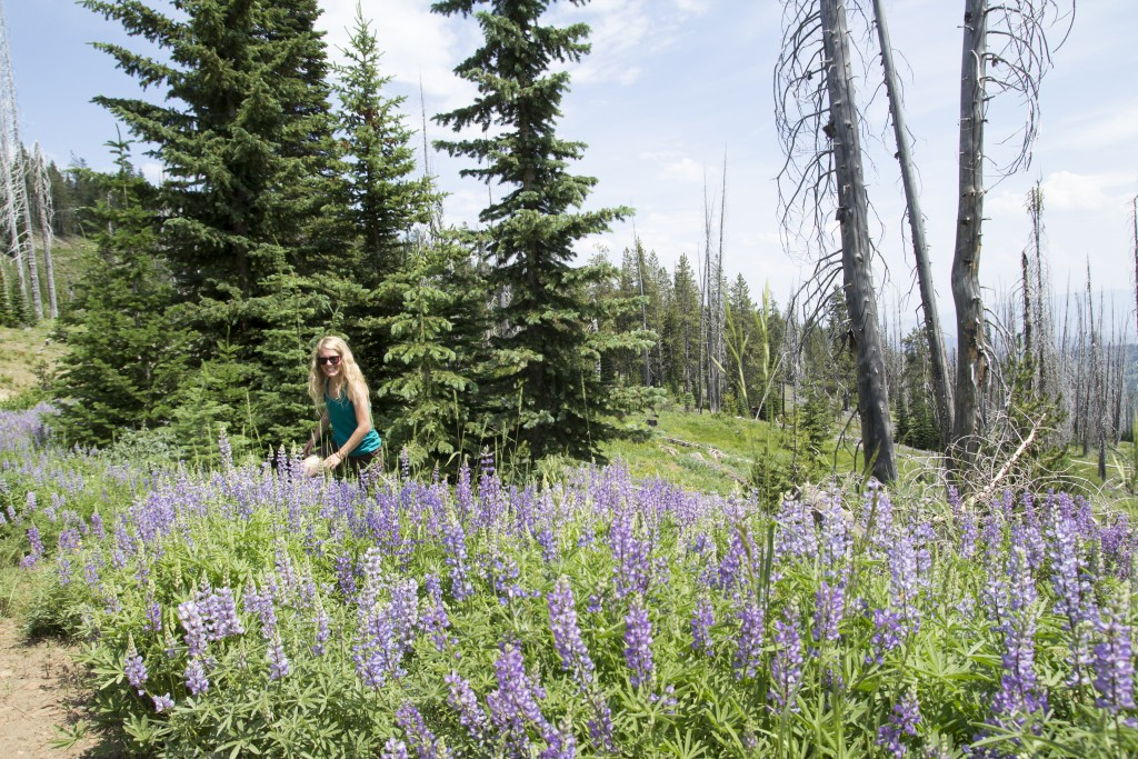 Robyn exploring the carpet of wildflowers in the southern Wallowa Mountains.