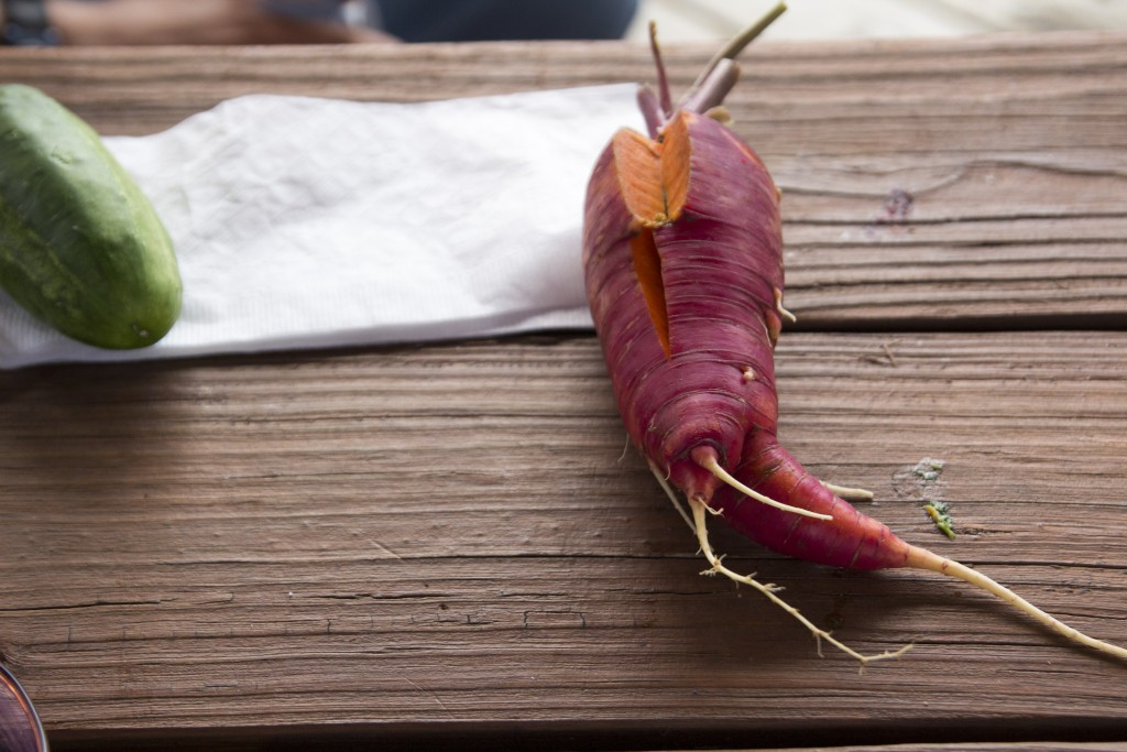 One of our mondo-carrots.