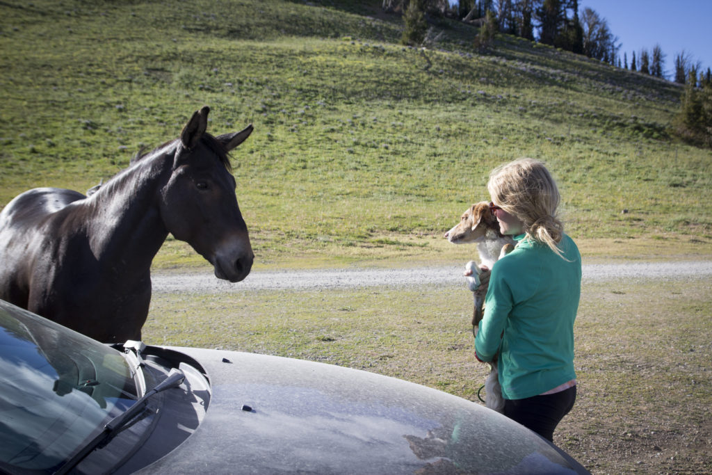 Chossy meeting her first horse. They were totally buds until Chossy realized how large a horse is.